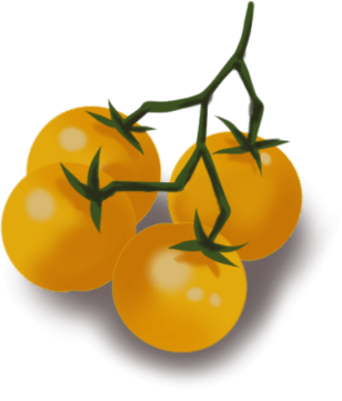 Tomate Nikolayev Yellow Cherry